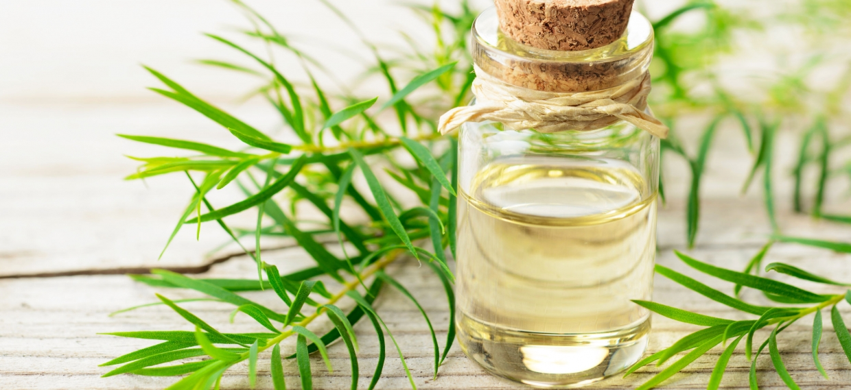 Using Essential Oils on Medical Devices to Stop Bacterial Infections