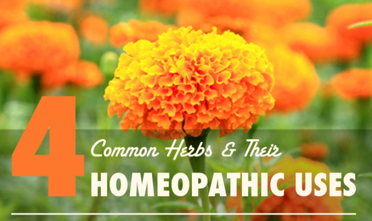 Homeopathic Indications of a Few Common Herbs