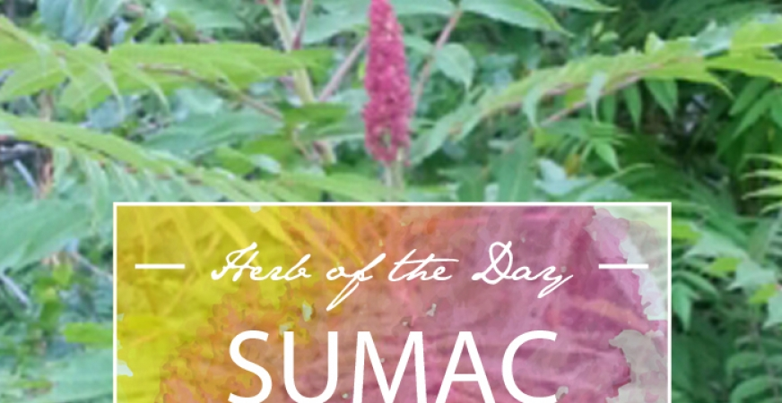 Herb of the Day: Sumac