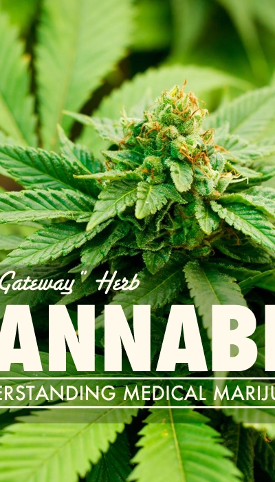 "Cannabis:  The ""Gateway"" Herb"