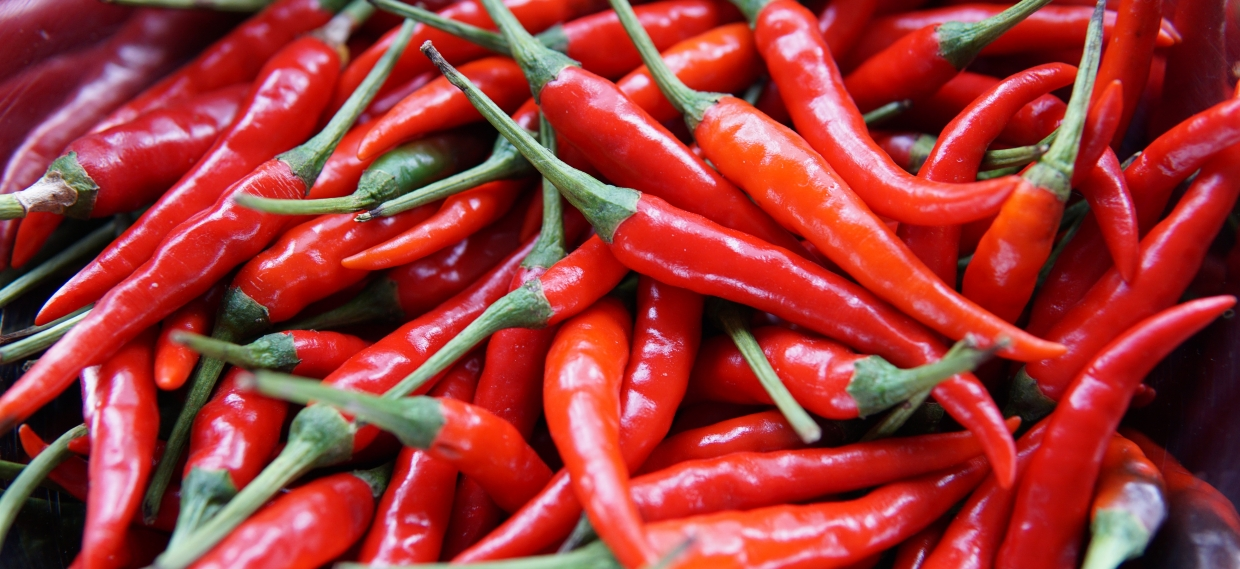 Immune Modulating Effects of Red Chili Peppers May Help Protect Brain After TBI