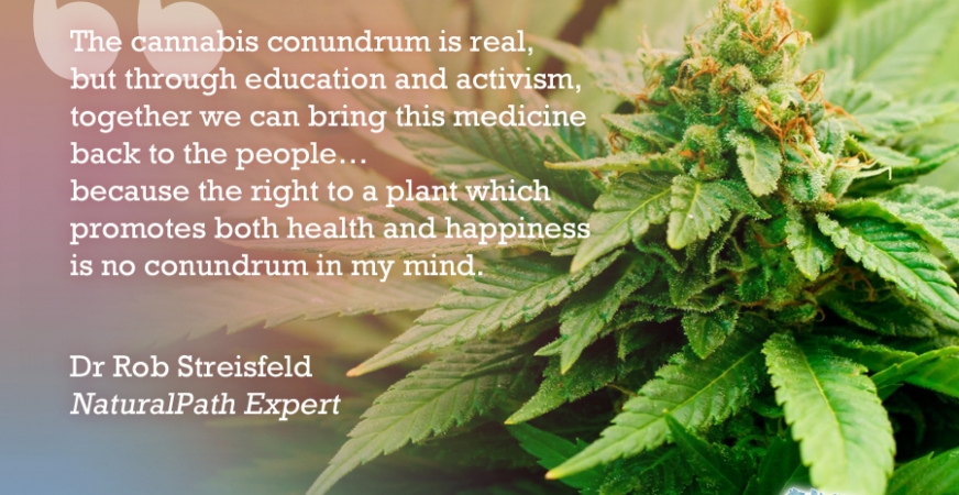 Dr. Rob Streisfeld Discusses the Science and History of Medical Cannabis at the Natural Cancer Prevention Summit