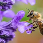 Bees Actually Cause Faster Flowering of Plants. . . By Biting Them!